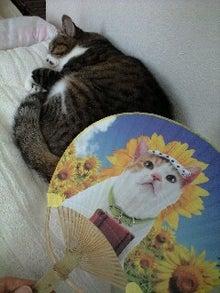 ずれずれブログ…湘南で猫と暮らせば…-120630_1344~0001.jpg