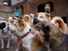 山梨より犬の多頭崩壊 SOS!