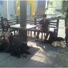 前橋市 渋川市 犬のしつけ 合同訓練の画像