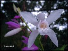 枕崎南楓園のさつき盆栽育て方-2012TW山野草ランキング