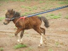 馬を愛する男のブログ Ebosikogen Horse Park-ほたる2