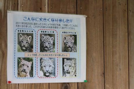 """$私の""""Big Cat PHOTO Diary"""""""