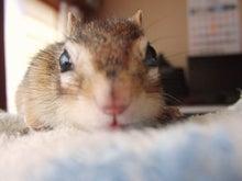 函館でシマリスを飼ってるオヤジのブログ