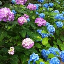 六甲・森林植物園のア…