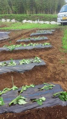 新規就農日記-2012070611160000.jpg