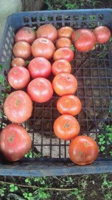 新規就農日記-2012070614490000.jpg