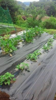 新規就農日記-2012070611470000.jpg