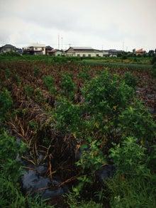 あつの農業への道-ipodfile.jpg