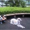 高崎市 安中市 犬のしつけ 街中訓練の画像