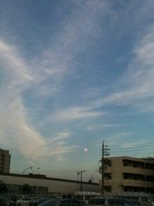 きな粉餅柄の猫。-名古屋の空