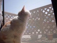 きな粉餅柄の猫。-あまと空