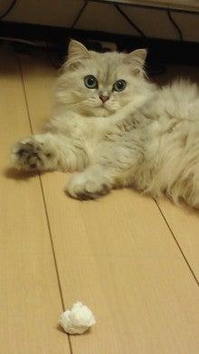 横浜のペットシッターぴよのすけのブログ-120624_2235~01.jpg