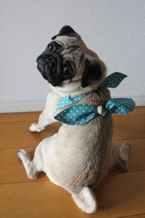 毎日がひな祭り♪パグ犬・ひな&もなと花のある暮らし