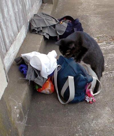 おもろいこと大好きぃぃ((((´゚゚∀゚゚`))))ノ♪-女子生徒の着替えと荷物をあさる…