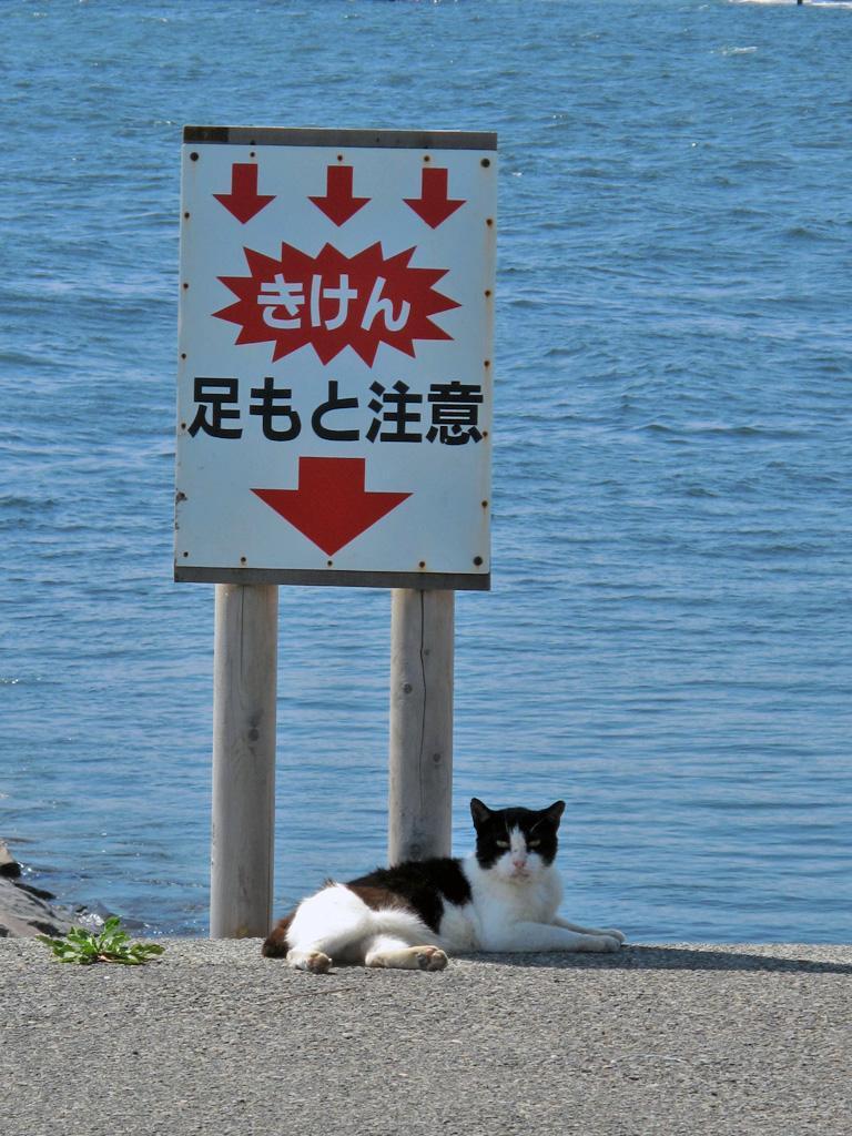 おもろいこと大好きぃぃ((((´゚゚∀゚゚`))))ノ♪-足元注意
