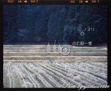 gachan1229のブログ「ツルに魅せられた男の記憶」-5984-008