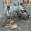 前橋市 渋川市 犬のしつけ 街中訓練の画像