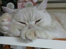 猫姉弟的日々 (民子&平蔵の日記)