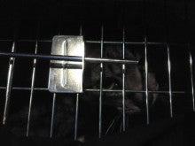 みまもり猫のブログ ~地域ねこの会~-20120614k2
