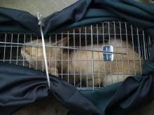 みまもり猫のブログ ~地域ねこの会~-20120620c3