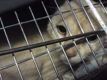 みまもり猫のブログ ~地域ねこの会~-20120620c1