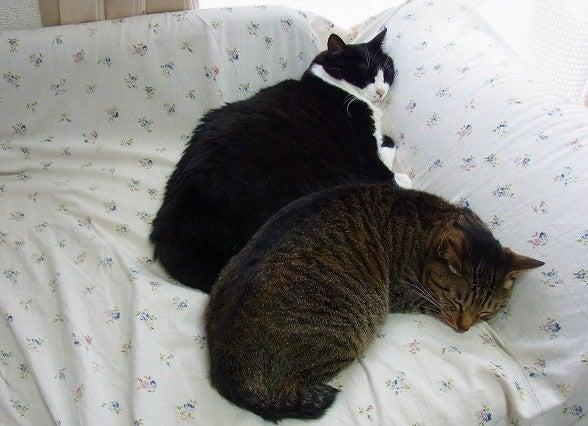 $今日の猫-rmirin