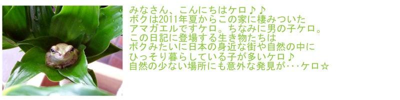 $ダフニアンのキラ☆ピチ♪生き物日記