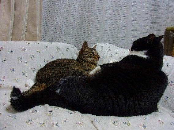 $今日の猫-mirin1
