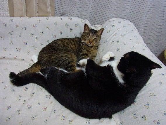 $今日の猫-mirin4