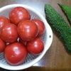 夏野菜♪の画像