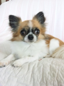 ☆アルマ☆  保護犬預かり日記