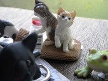 $雑貨屋「白猫堂ノスタルジック」      オフィシャル的ブログ 「白猫道」