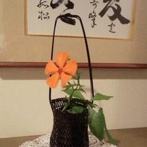 ガンピの花