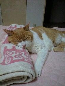 ずれずれブログ…湘南で猫と暮らせば…-120729_2133~0001.jpg