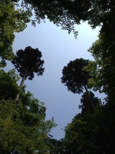 京都から☆大切な思いを伝えたい 六代目・八百梅商店-木漏れ日