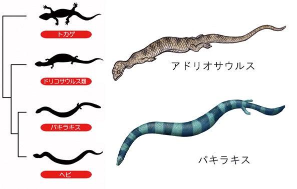 川崎悟司 オフィシャルブログ 古世界の住人 Powered by Ameba-トカゲからヘビへの進化図
