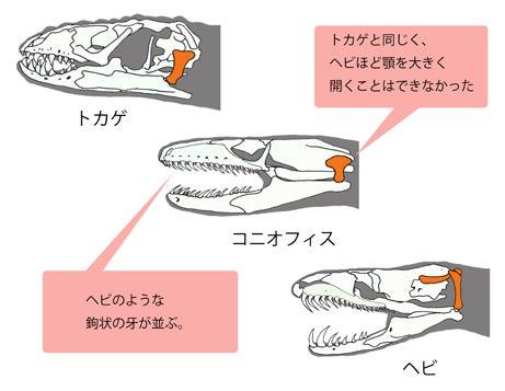 川崎悟司 オフィシャルブログ 古世界の住人 Powered by Ameba-トカゲとヘビの中間の特徴をもとコニオフィス