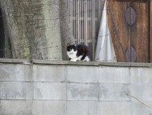 $あおぞら魔女-見守る猫