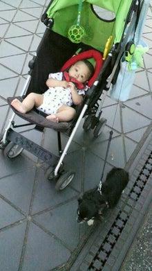 *。*。*。らむブロ*。*。*。~☆Happy Chihuahua Life☆~-2012080514070000.jpg