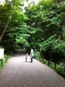 徒然日記-自然教育園2012