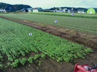 ハルくんの営農日誌-2012080817180000.jpg