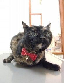 ペットの「がん」 ―レオどうぶつ病院腫瘍科―