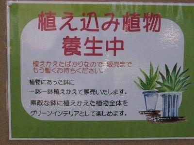 戦慄の緑化戦士K-松元改装