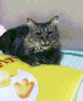 $♪幸せいっぱい♪♪猫たちと一緒のライフ♪