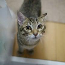 忠猫ミー君/トライア…