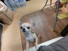 埼玉県所沢市を中心に活動する行政書士、國分義明の法務相談