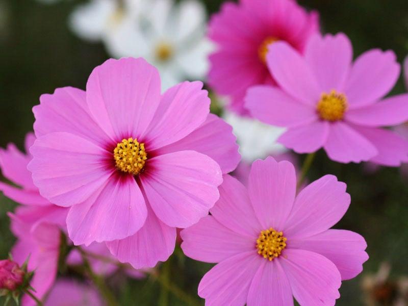 月 花 8 誕生 14 日 8月の誕生花と花言葉