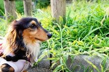★☆気まぐれ★Nail&Dog★Diary☆★