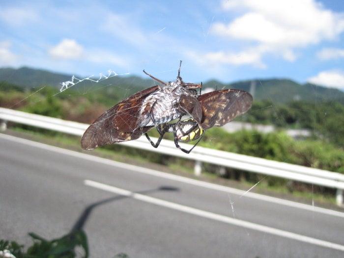 歩き人ふみの徒歩世界旅行 日本・台湾編-セミとクモ