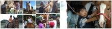 馬の学校 活動報告-HPtop